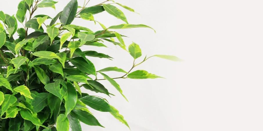Превью к статье Як створити вічнозелений контент: керівництво для інтернет-ботаніків